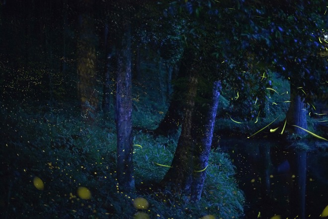Fireflies Japanese symbolism