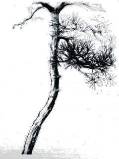 pinedrawing