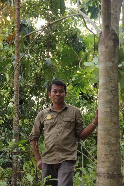 58 Panut Hadisiswoyo next to a tree planted by Panut in 2009 in OIC restoration site in the Leuser Ecosystem forest-min