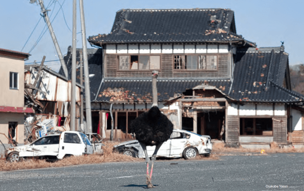 john gohorry ostrich cadenzas kyoto journal