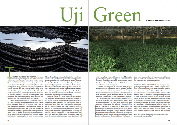 Uji green matcha tea Japan Kyoto Journal issue