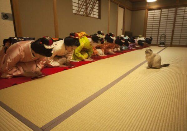 Photo by Naoyuki Ogino