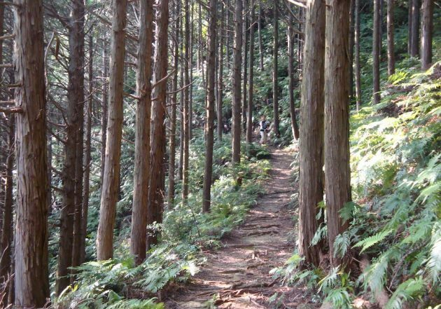 kumano-kodo-pilgrimage-path-forest